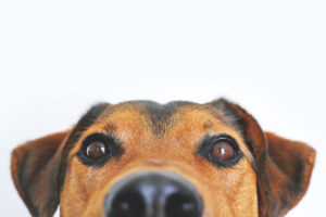 Greenleaf, dog